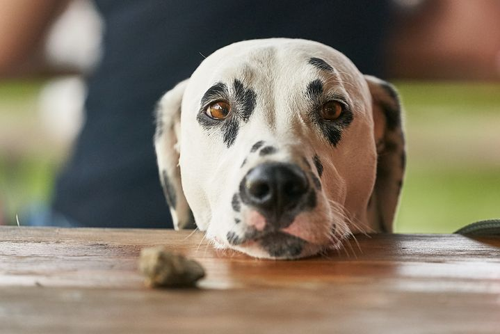 dog looking at a piece of food with wishful eyes