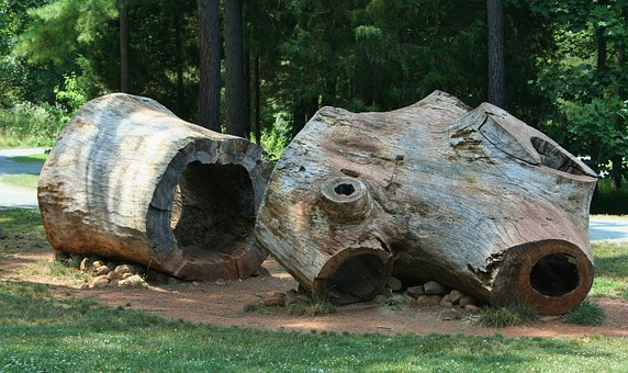 hollow logs cut and laying on the ground