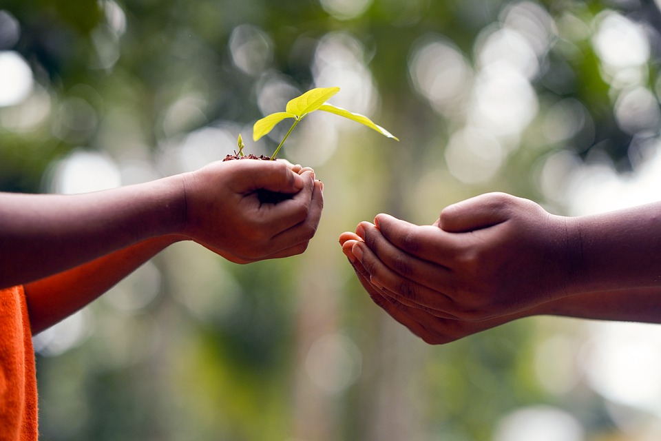 cupped hands with a flowering plant handing them to another set of cupped hands sharing