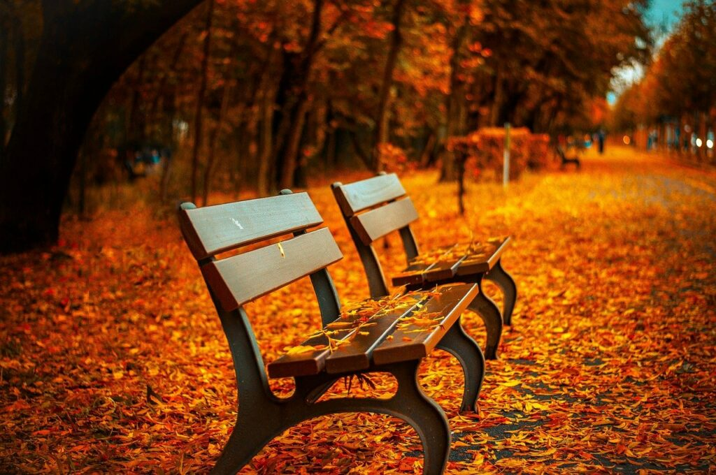 benches surrounded by orange and yellow leaves of fall season